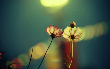 Light-Touch-The-Flower-Images-HD-Wallpaper